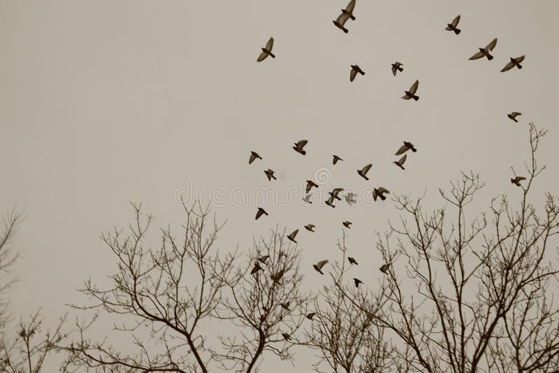 Escape dos pássaros ao céu fotos de stock