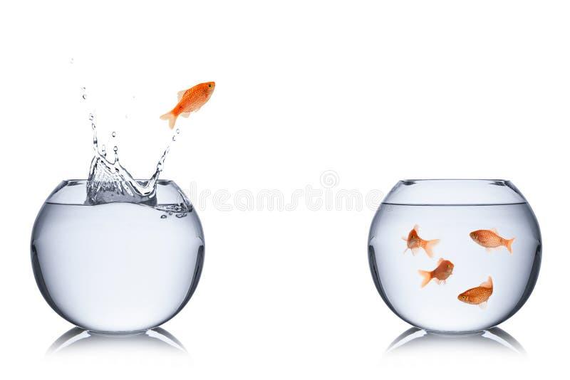 Escape dos peixes fotografia de stock