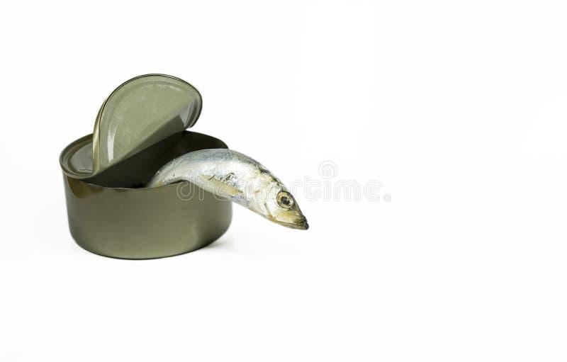 Escape dos peixes imagem de stock