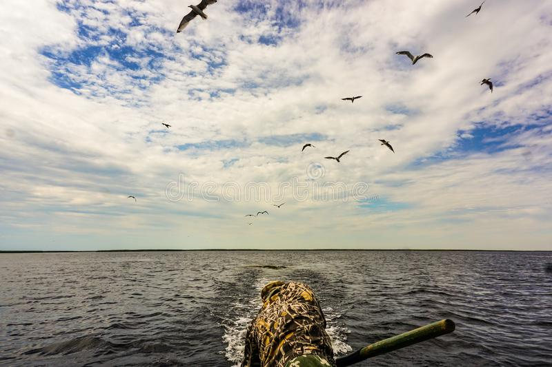 Escape from the pursuit. Gulls accompany the motor boat in the lower reaches of the Volga River. Propeller is constantly entangled in algae in shallow water royalty free stock images