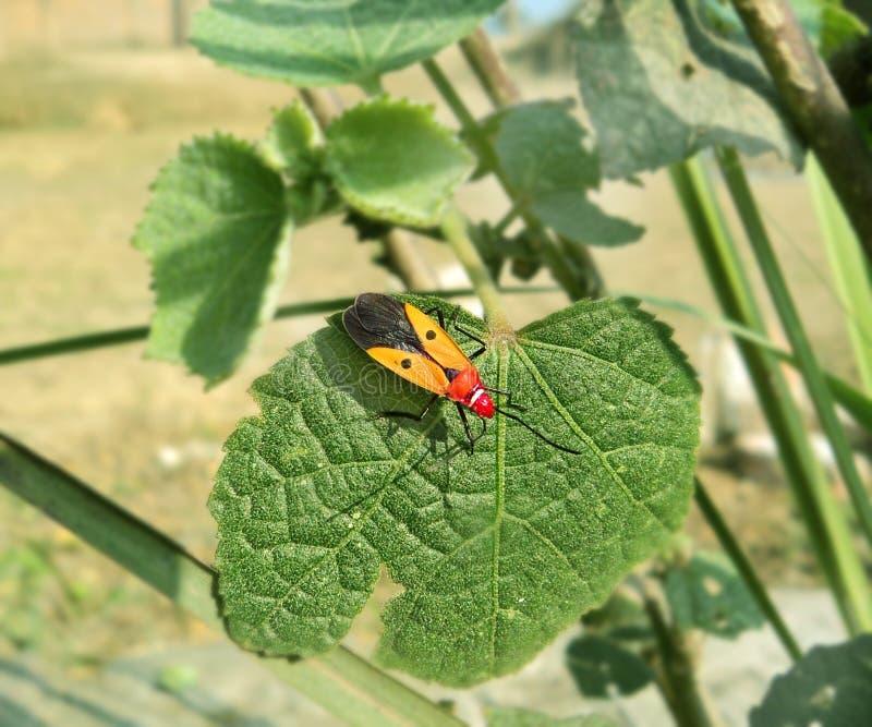 Escarabajo Foto de archivo