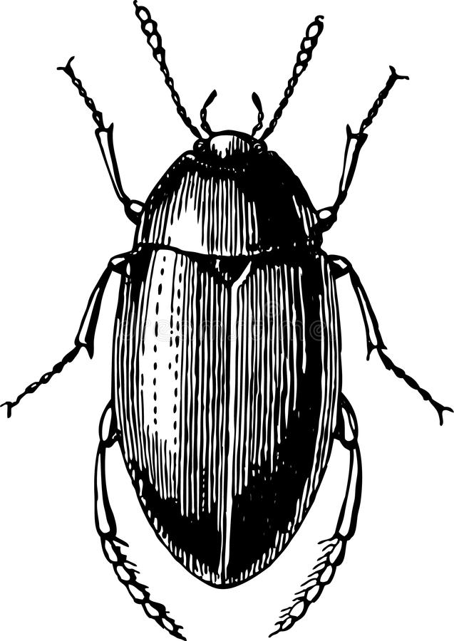 Escarabajo ilustración del vector