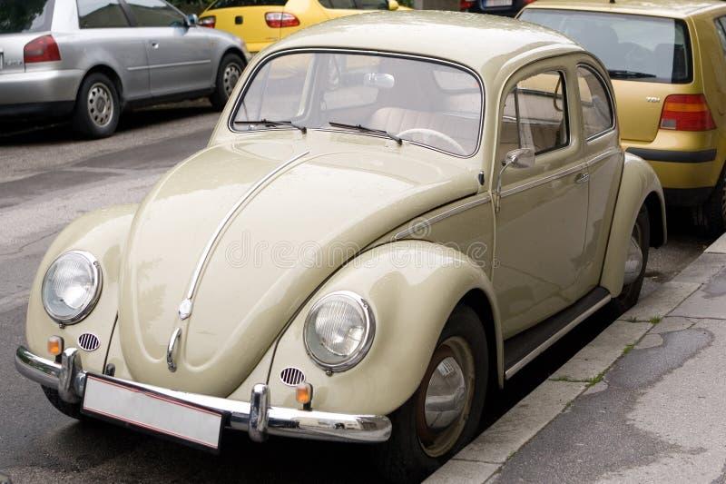 Escarabajo amarillento fotografía de archivo