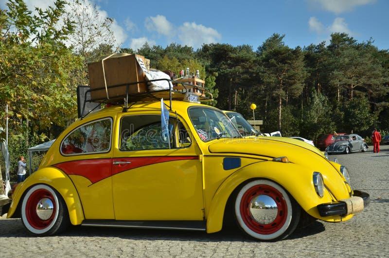 Escarabajo amarillo imagen de archivo libre de regalías