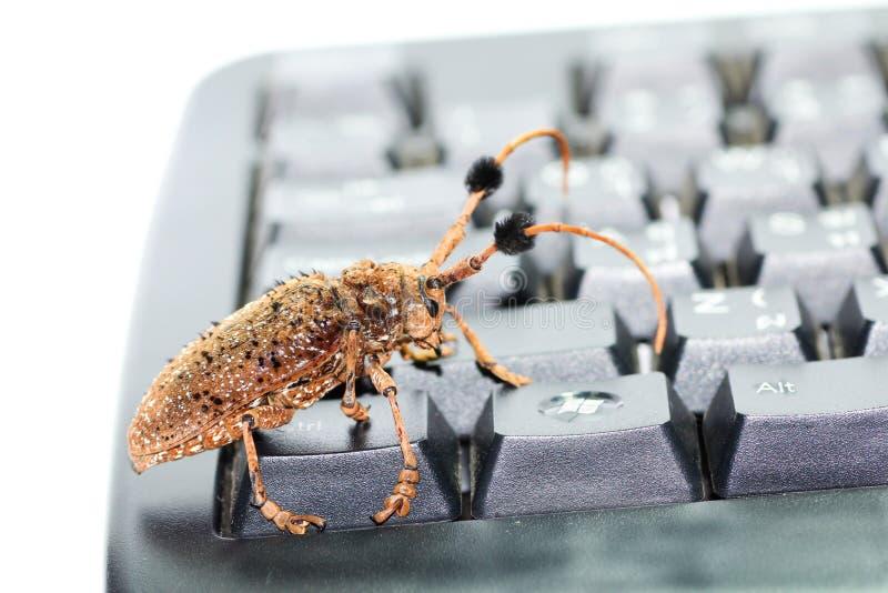 Escarabajo de Brown fotos de archivo libres de regalías