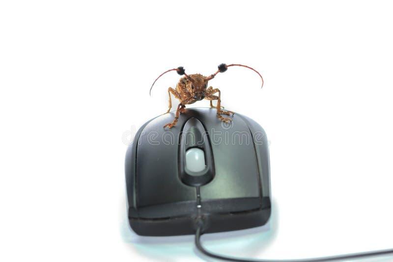 Escarabajo de Brown imágenes de archivo libres de regalías