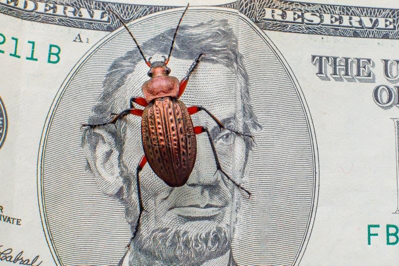 Escarabajo de tierra en un billete de d?lar cinco Escarabajo del dinero imagenes de archivo