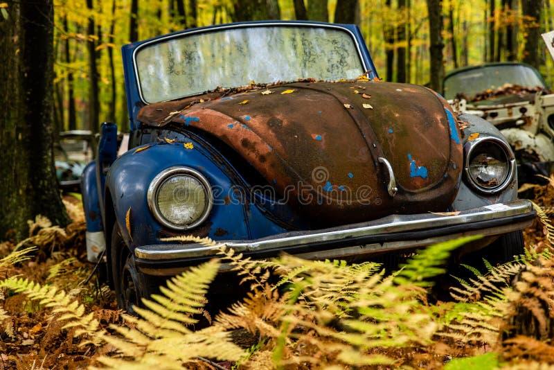 Escarabajo de VW del vintage - tipo I de Volkswagen - depósito de chatarra de Pennsylvania foto de archivo