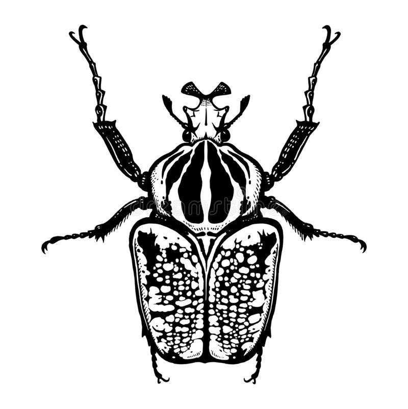 Escarabajo del insecto aislado en el fondo blanco goliath Bosquejo blanco y negro libre illustration