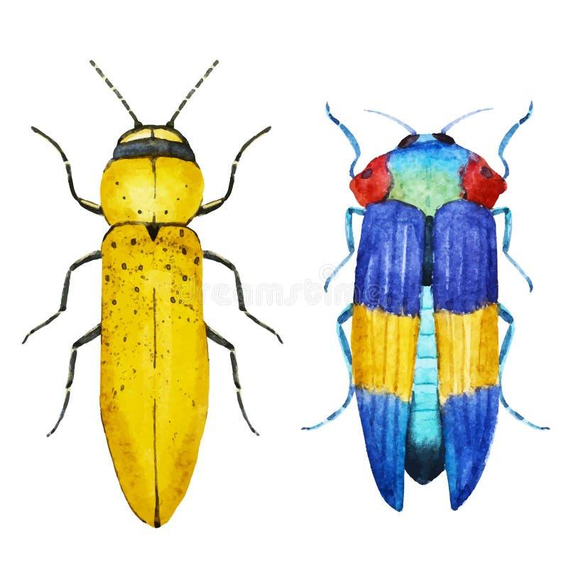 Escarabajo del insecto de la acuarela libre illustration