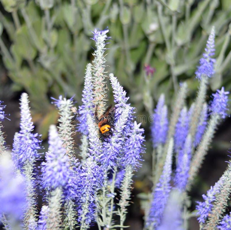 Download Escarabajo En Los Colores, Vigilante Durmiente, Naturaleza Hermosa, Habitante Interesante, Hora De Descansar, Verano Imagen de archivo - Imagen de poco, falsificación: 41910827