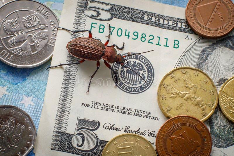 Escarabajo molido en un billete de d?lar cinco, peque?as monedas de Europa Concepto: escarabajo del dinero imagen de archivo libre de regalías