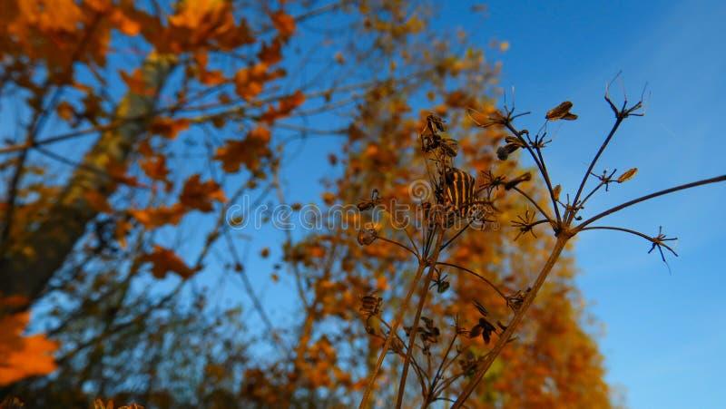 Escarabajo rayado negro anaranjado en otoño en la costa de Danubio fotos de archivo libres de regalías