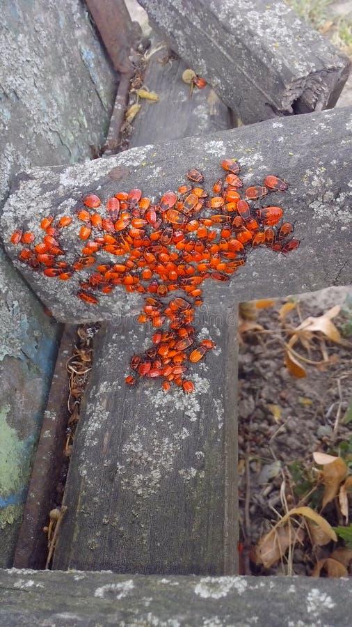 escarabajos foto de archivo libre de regalías