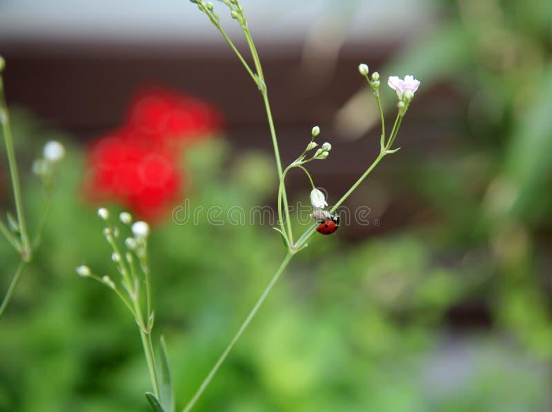 Escarabajos en un jardín, Europa imagen de archivo libre de regalías