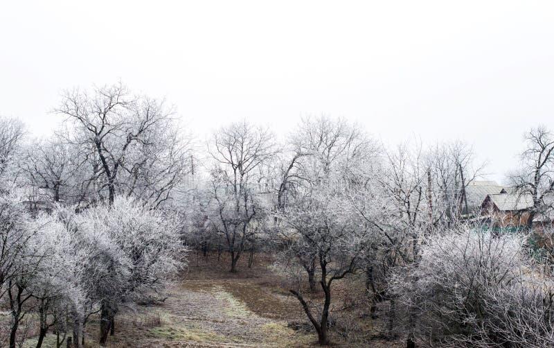 Download Escarcha Blanca En árboles En El Campo Imagen de archivo - Imagen de blanco, fondo: 64200753