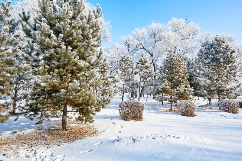 A escarcha e a neve e o céu azul ajardinam imagens de stock