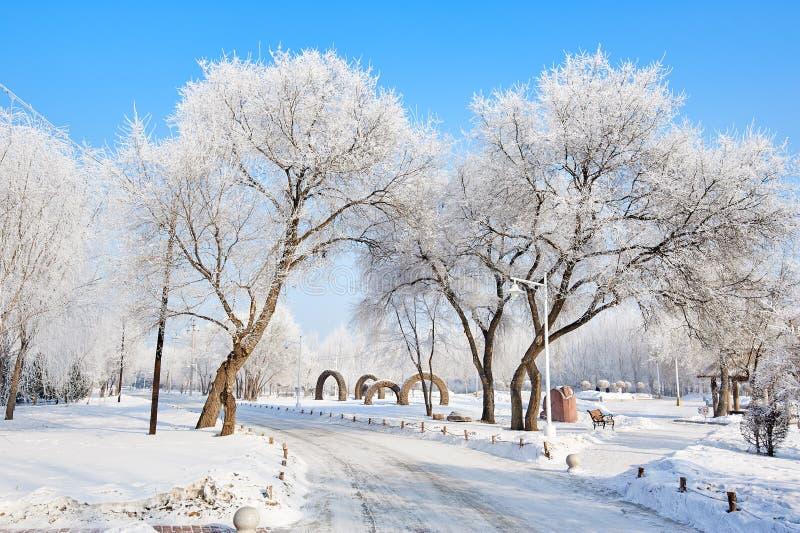 A escarcha e a neve e o trajeto cênicos imagem de stock royalty free