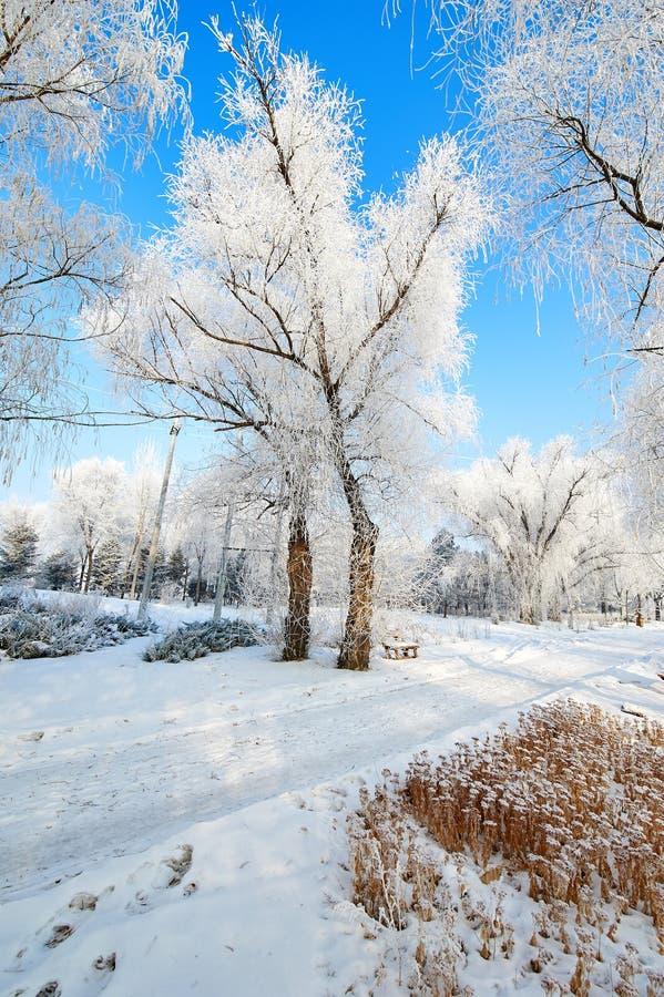 A escarcha e a neve macia e o céu azul ajardinam fotos de stock royalty free