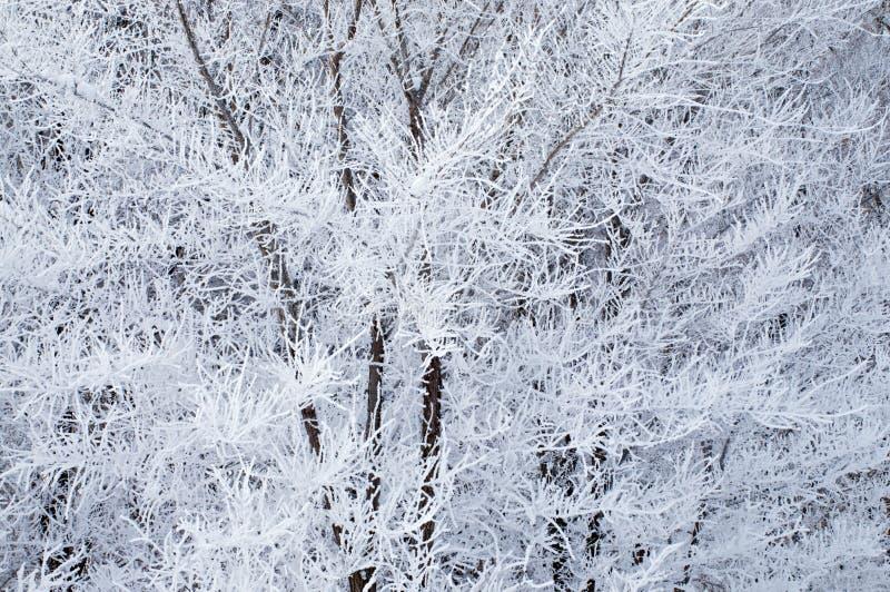 Escarcha en árboles foto de archivo