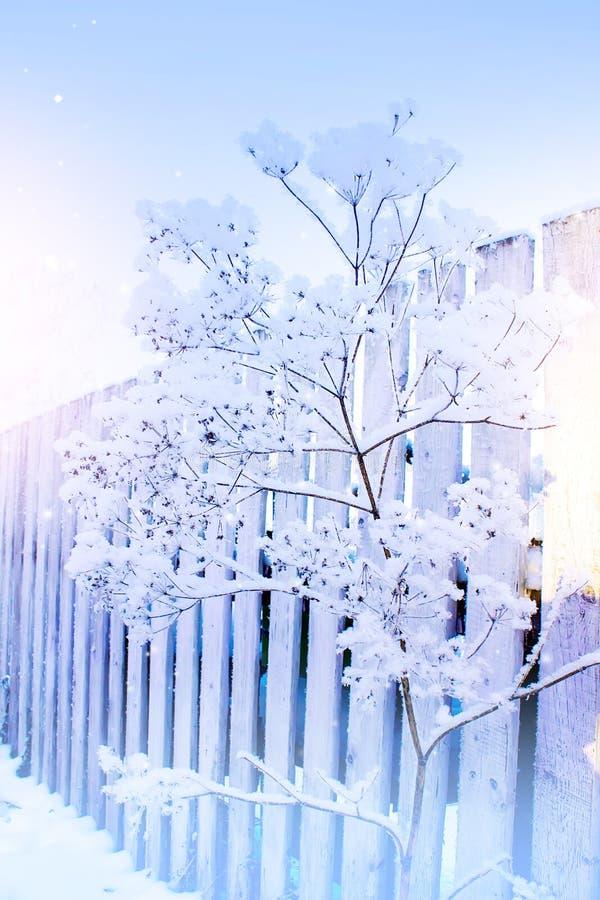 Escarcha en hierba seca Hierba helada en el día de invierno frío, fondo natural del invierno foto de archivo libre de regalías