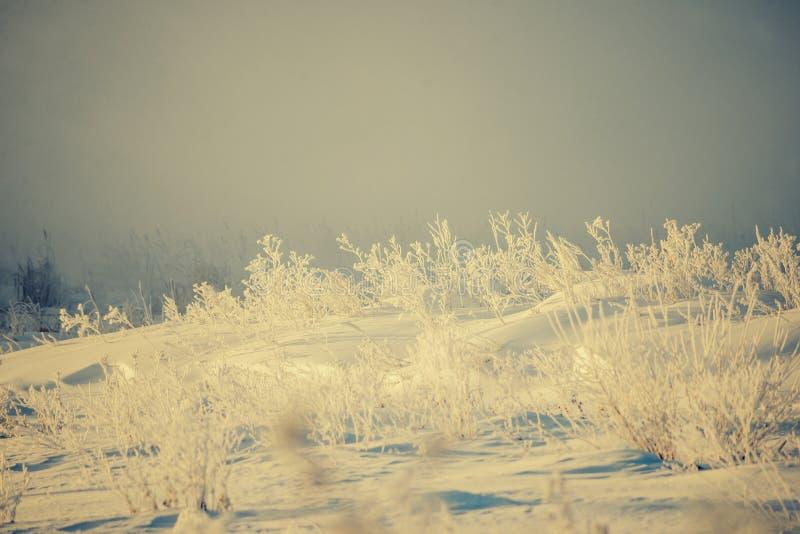 Escarcha que cubre ramas de árbol desnudas en un día soleado del ` s del invierno fotos de archivo libres de regalías