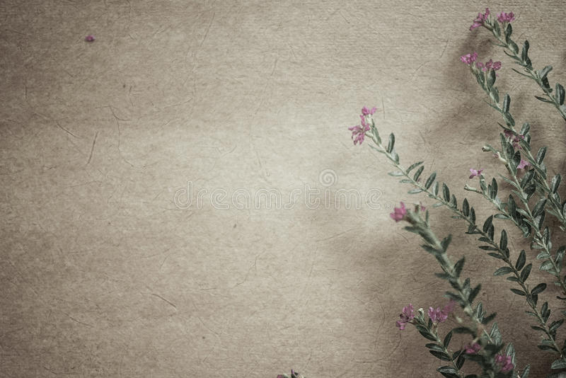 Escarde las flores en estilo del color del vintage en textura del papel de la mora imagen de archivo libre de regalías