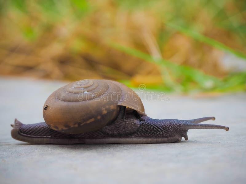 Escargot à court terme photographie stock
