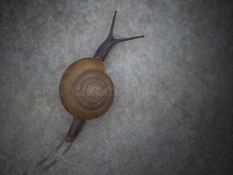Escargot à court terme photographie stock libre de droits