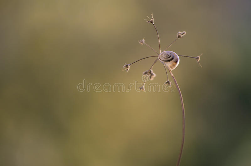 Escargot à la lumière de coucher du soleil photos libres de droits