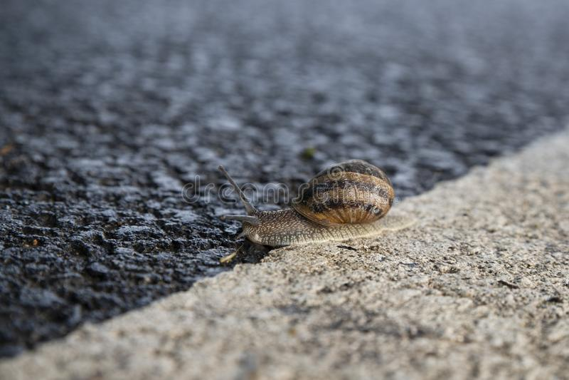 Escargot à une route image stock