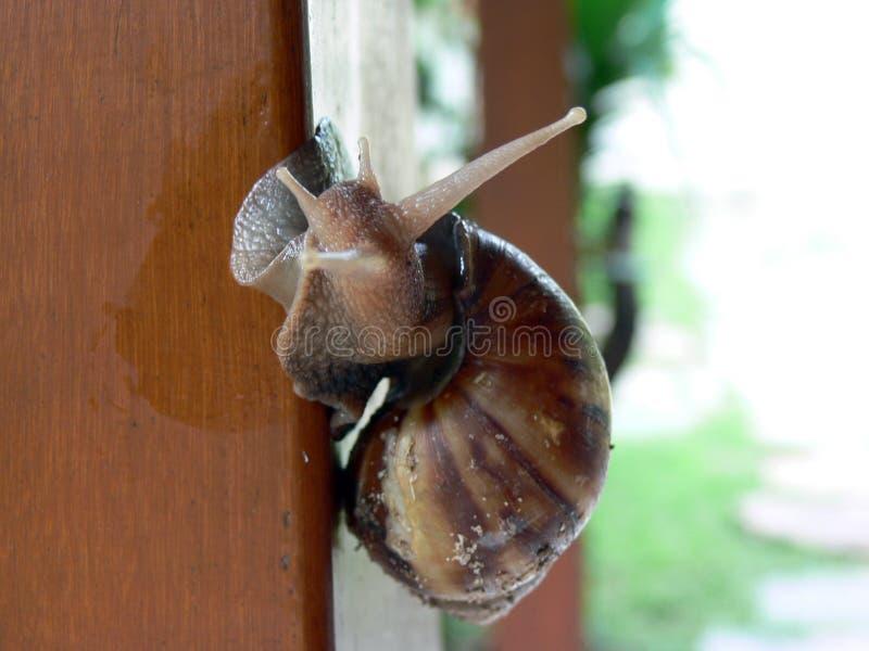escargot σαλιγκάρι στοκ εικόνα με δικαίωμα ελεύθερης χρήσης