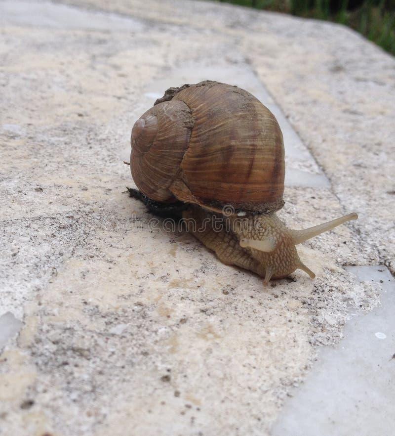 Escargot images stock