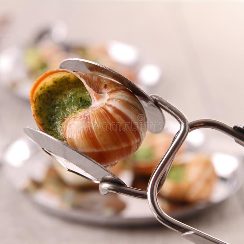 Escargot, caracol de bourgogne foto de stock royalty free