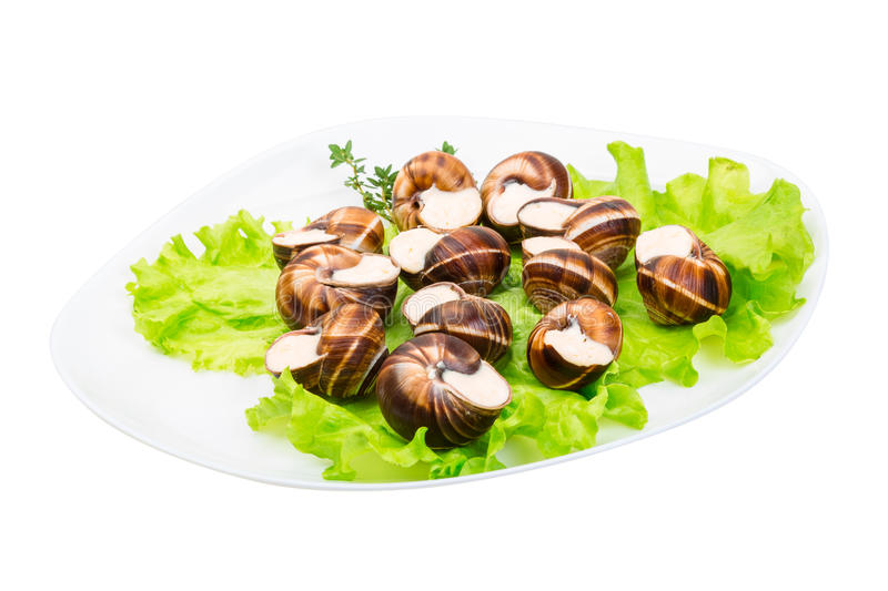 Escargot. With cheese sauce isolated on white background royalty free stock image