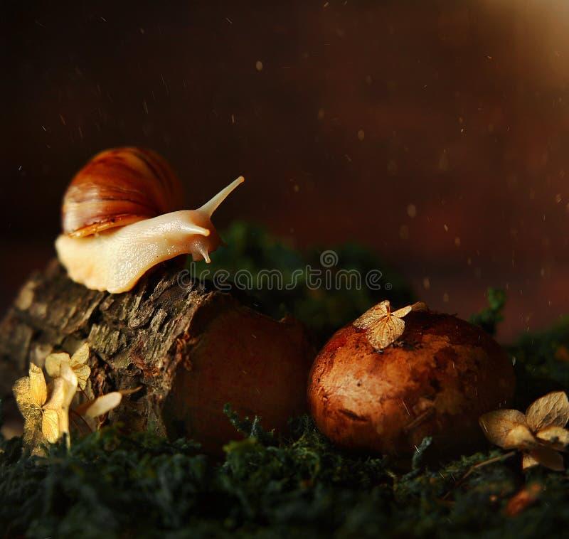 Escargot dans la for?t sur un arbre images stock