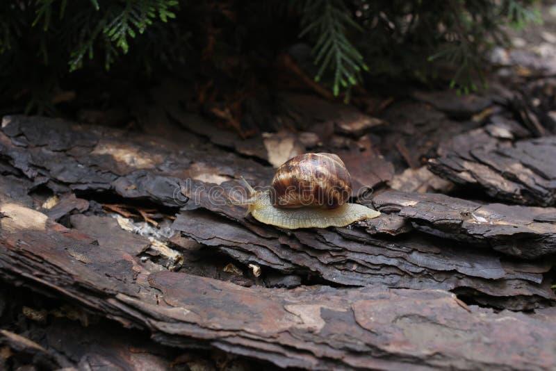 Escargot dans la nature image libre de droits