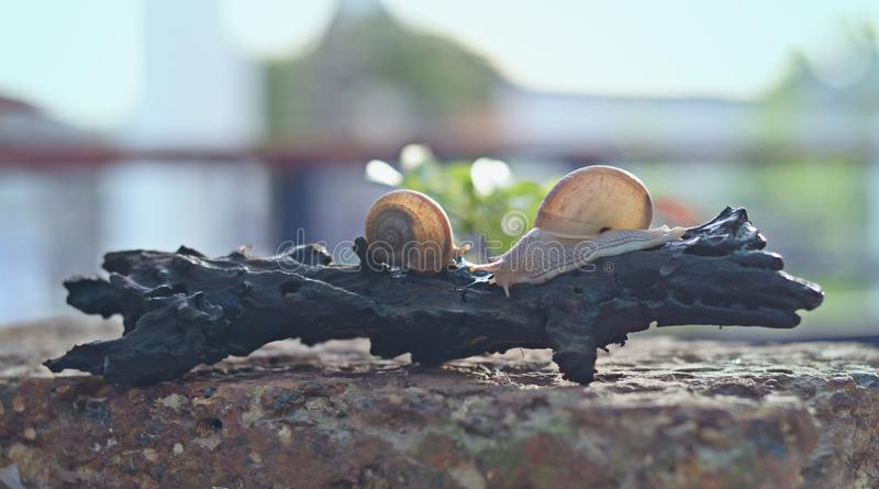 Escargot dans le dessus du bois photographie stock libre de droits