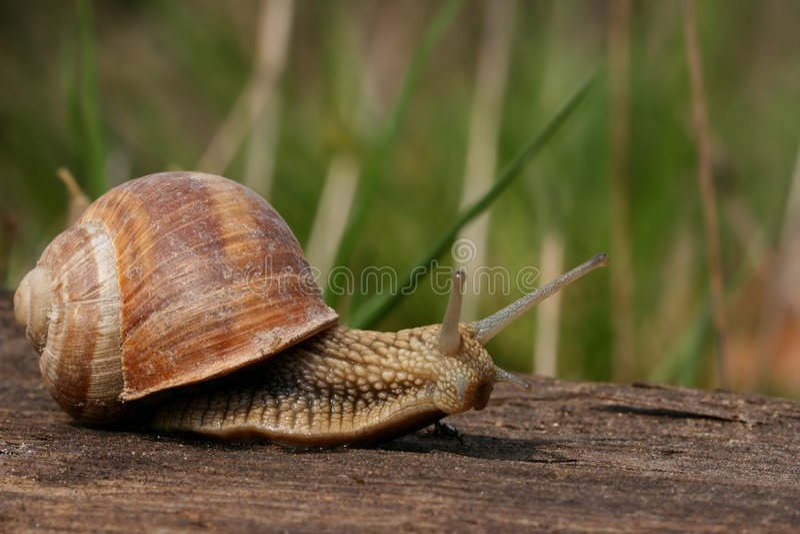 Escargot dans le jardin photos libres de droits