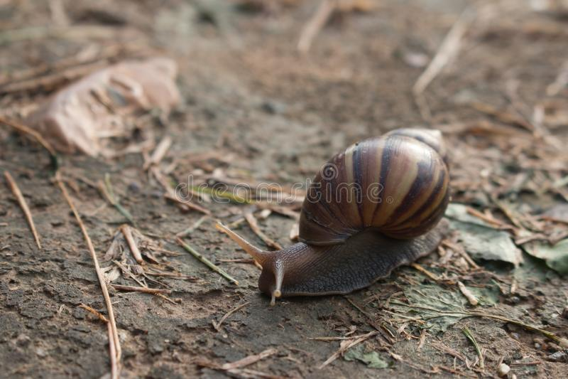 Escargot dans le jardin sur le sol images stock