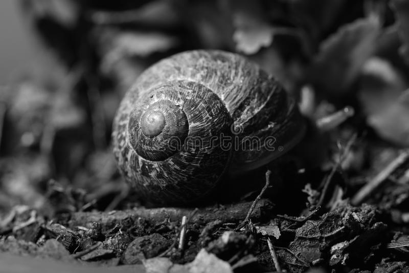 Escargot dans le sol images libres de droits