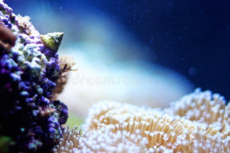 Escargot dans un aquarium image libre de droits