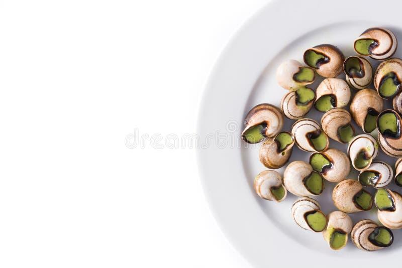 Escargot de Bourgogne fotografia de stock