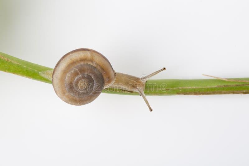 Escargot de jardin photographie stock libre de droits