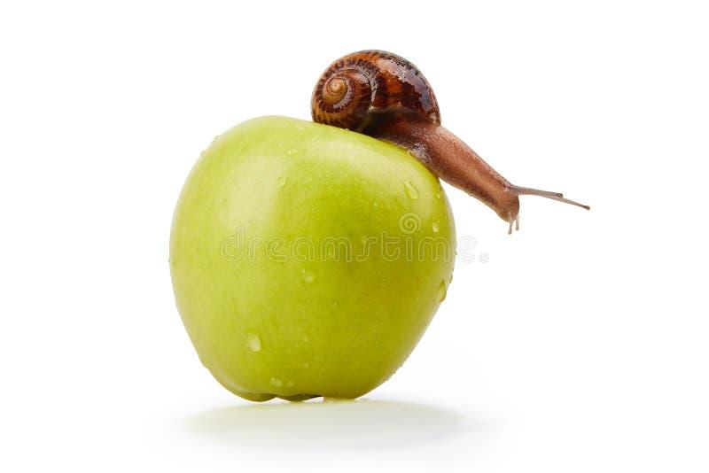 Escargot de jardin rampant sur une pomme sur un fond blanc image libre de droits