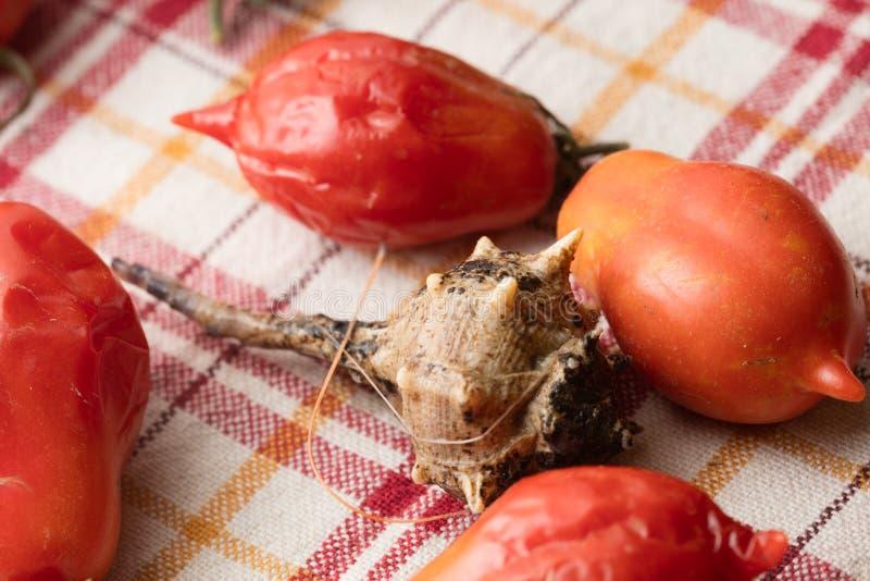 Escargot de mer avec des tomates photo libre de droits