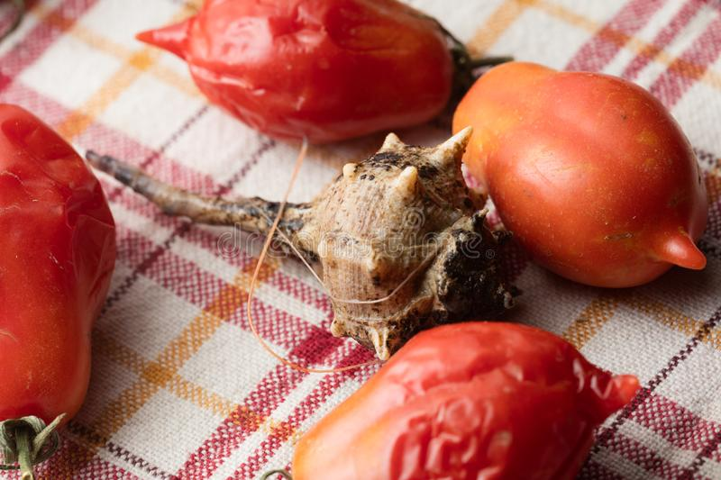 Escargot de mer avec des tomates photo stock