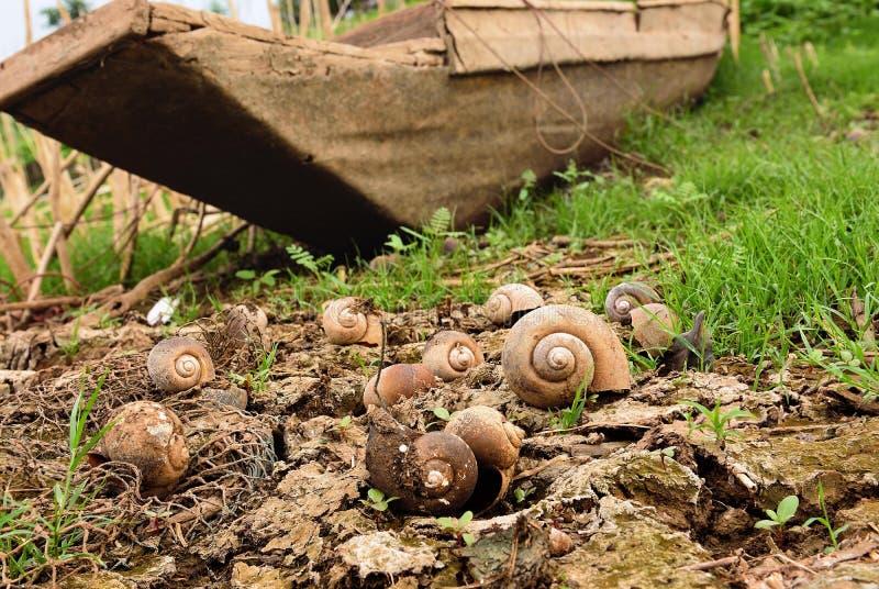 Escargot de Shell au sol sec photo libre de droits