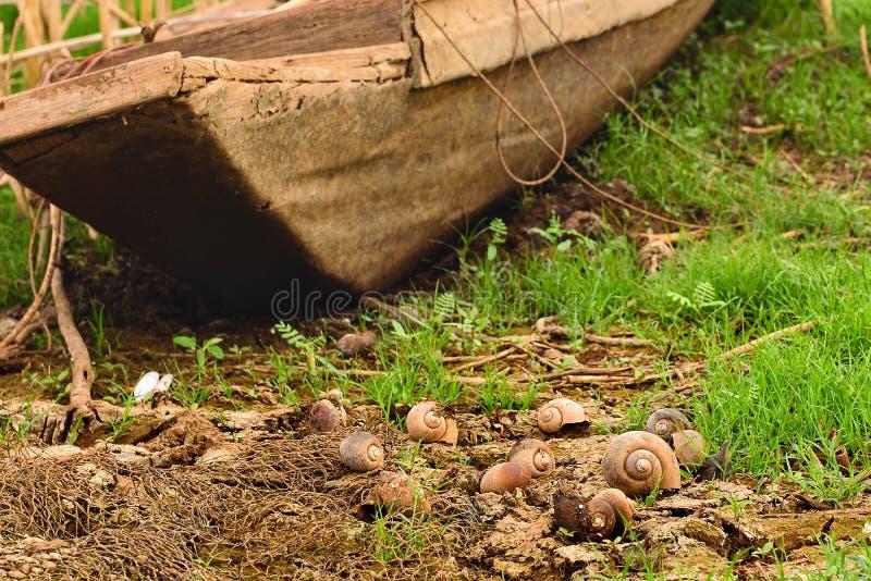 Escargot de Shell au sol sec image libre de droits