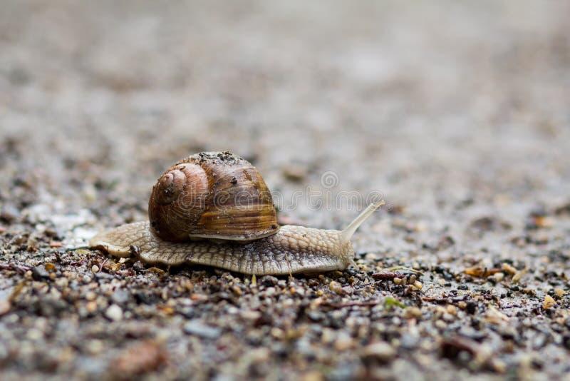 Escargot de terre au sol image stock